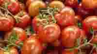 Petani muda Tomat Beef